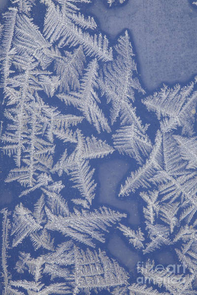 Fern Frost Photograph - Frost On A Window by Ted Kinsman
