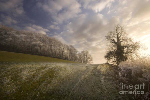 Wall Art - Photograph - Frosty Landscape by Angel Ciesniarska