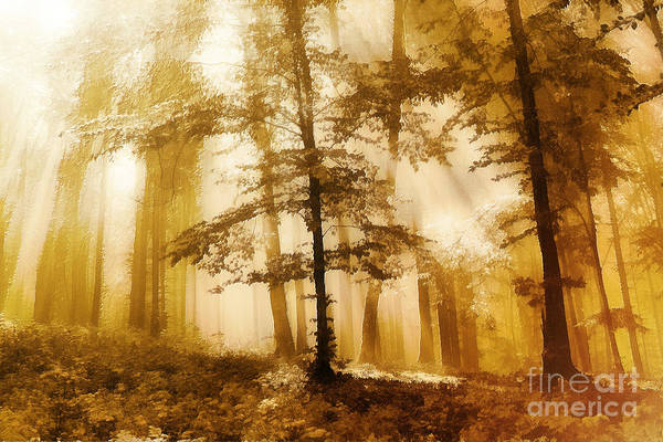 Golden Forest  Art Print by Odon Czintos