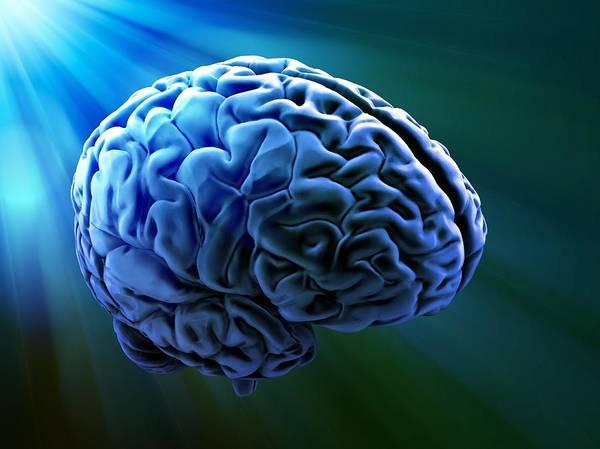 Light And Shadow Digital Art - Human Brain, Artwork by Andrzej Wojcicki