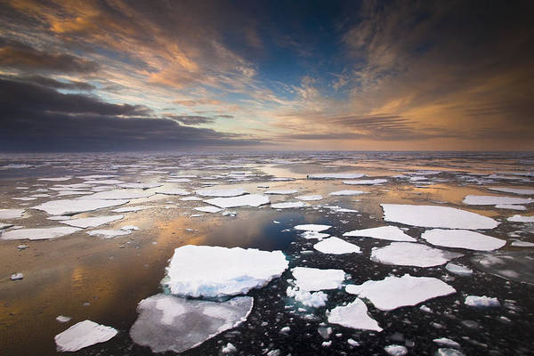 Photograph - Ice Floes At Sunset Near Mertz Glacier by Colin Monteath