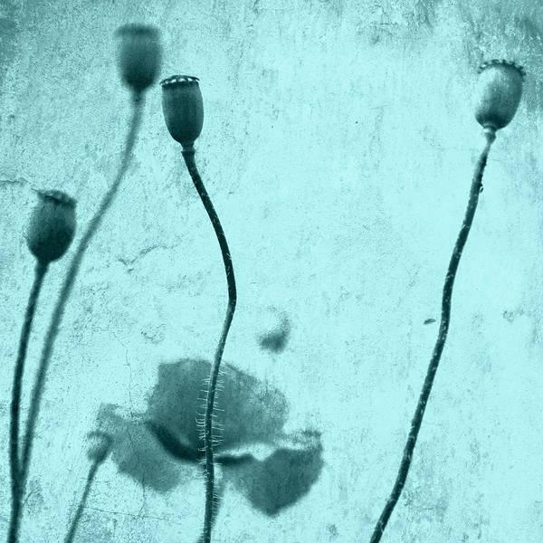 Wall Art - Photograph - Poppy Art Image by Falko Follert