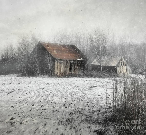 Photograph - Abandoned Barn With Snow Falling by Sandra Cunningham