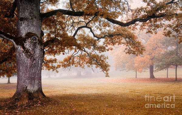 Wall Art - Photograph - Autumn by Kati Finell