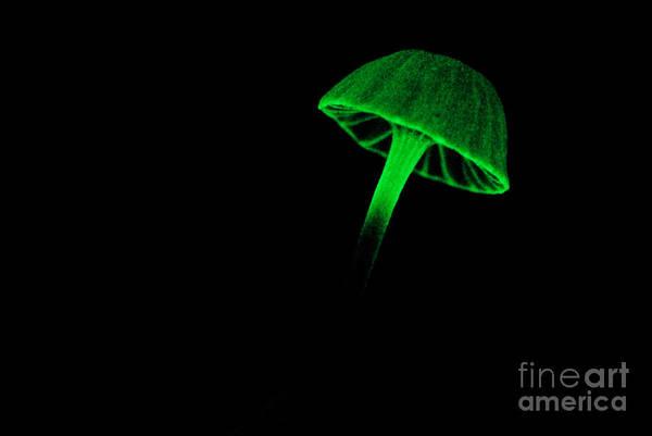 Photograph - Bioluminescent Fungi by Dant� Fenolio