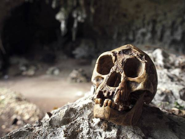 Wall Art - Photograph - Homo Floresiensis Skull by Javier Truebamsf