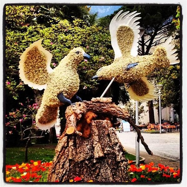 Birds Wall Art - Photograph - Instagram Photo by Luisa Azzolini