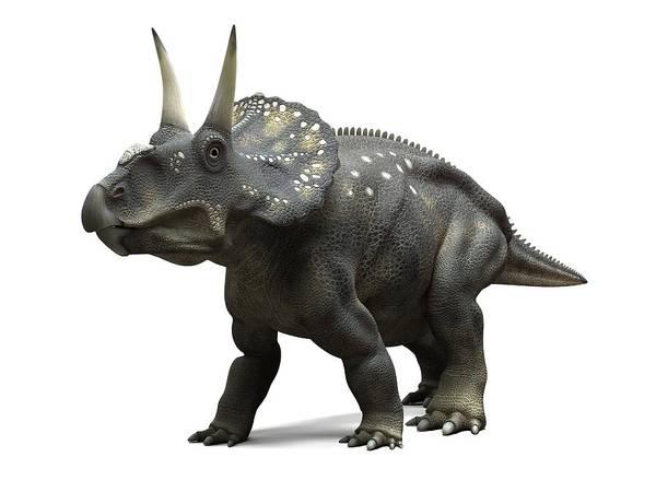 Diceratops Photograph - Nedoceratops Dinosaur, Artwork by Sciepro
