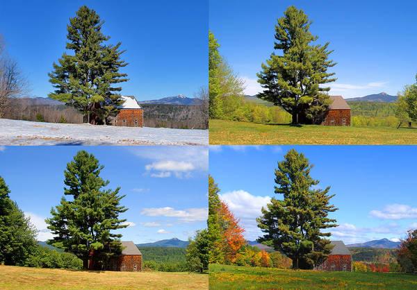 Photograph - 4 Season Tree And Barn by Larry Landolfi