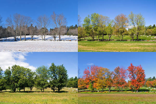 4 Season Trees Art Print