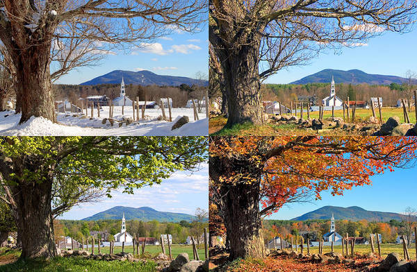 Photograph - 4 Seasons Classic Tamworth Trees by Larry Landolfi