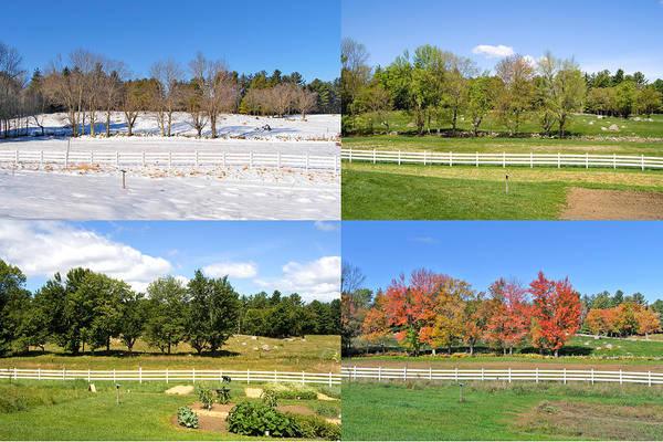Photograph - 4 Seasons Trees And Fence by Larry Landolfi