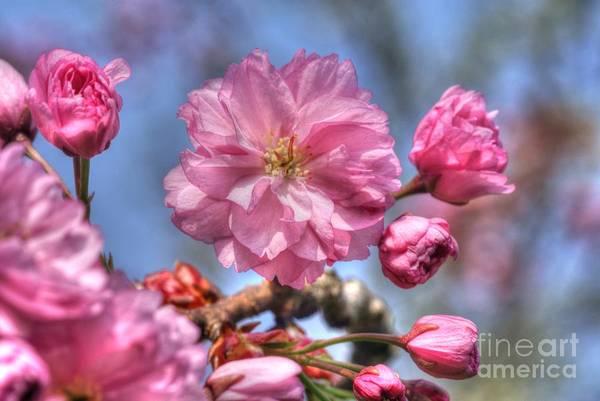 Photograph - Spring Blossom by David Birchall