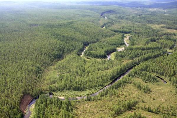 Blast Wave Wall Art - Photograph - Tunguska Forest by Ria Novosti