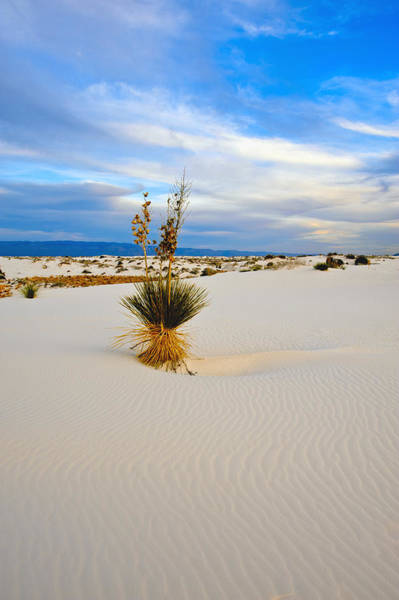 White Sands Art Print by Larry Gohl