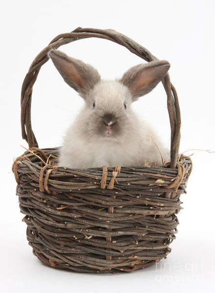 Photograph - Bunny In A Basket by Mark Taylor