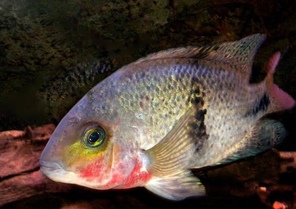 Photograph - Fish Living In Denmark by Colette V Hera  Guggenheim