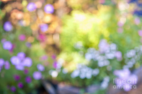 Botanical Gardens Photograph - Flower Garden In Sunshine by Elena Elisseeva