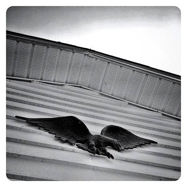 Monochrome Photograph - Looking Up by Natasha Marco