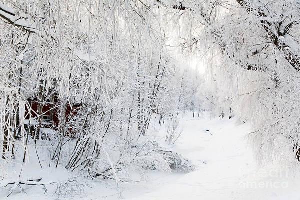 Wall Art - Photograph - Winter Landscape by Kati Finell