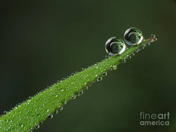 Photograph - Drops by Odon Czintos