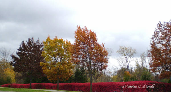 Photograph - Fall Colors Collection - Michigan by Monica C Stovall