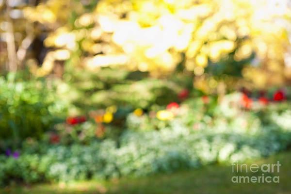 Wall Art - Photograph - Flower Garden In Sunshine by Elena Elisseeva