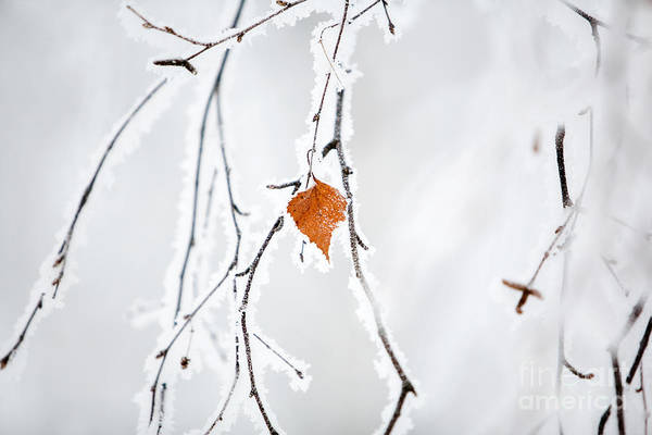 Wall Art - Photograph - Winter by Kati Finell