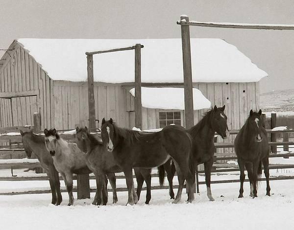 Photograph - 71 Ranch by Diane Bohna