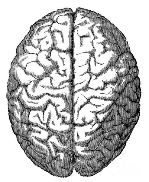 Photograph - Brain by Science Source