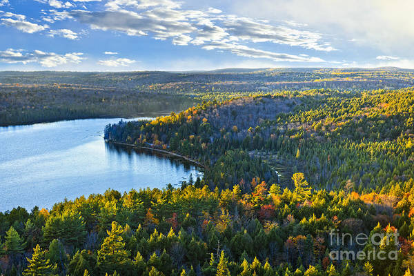 Boreal Forest Photograph - Fall Forest And Lake by Elena Elisseeva