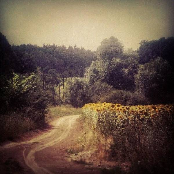 Sunflowers Wall Art - Photograph - Instagram Photo by Taras Paholiuk
