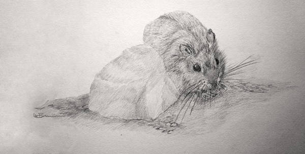 Hamster Drawing - A Bitty Thing by Leslie M Browning