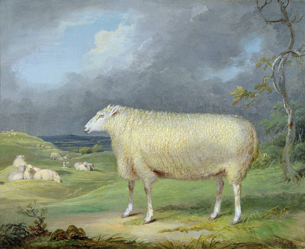 Ward Painting - A Border Leicester Ewe  by James Ward