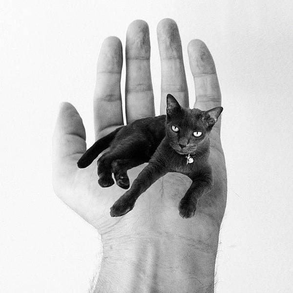 Wall Art - Photograph - A Cat In The Hand Is Worth by Cameron Bentley
