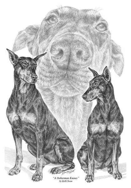 Drawing - A Doberman Knows - Dobe Pinscher Art Print by Kelli Swan