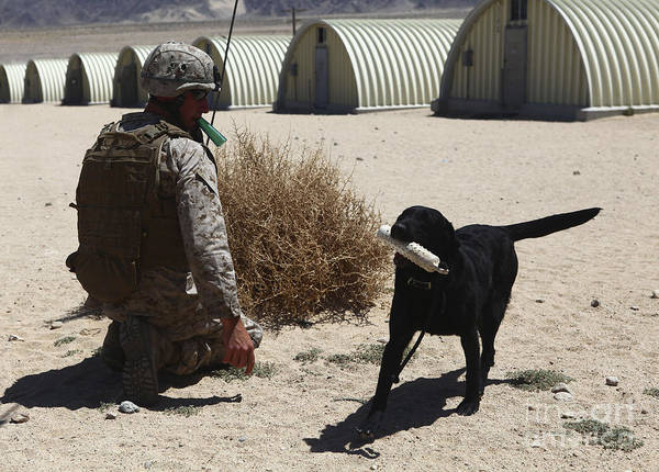 Photograph - A Dog Handler Calls Over A Black by Stocktrek Images