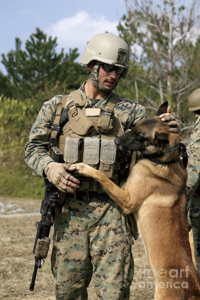 Photograph - A Dog Handler Gives Positive by Stocktrek Images