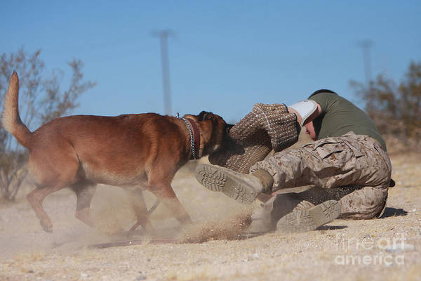 Photograph - A Dog Handler Works On Take-down by Stocktrek Images