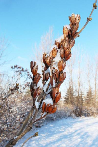Christy Photograph - A Dose Of Winter by Christy Patino