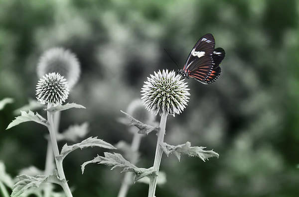 Photograph - A Flight Of Fancy by Robin Webster