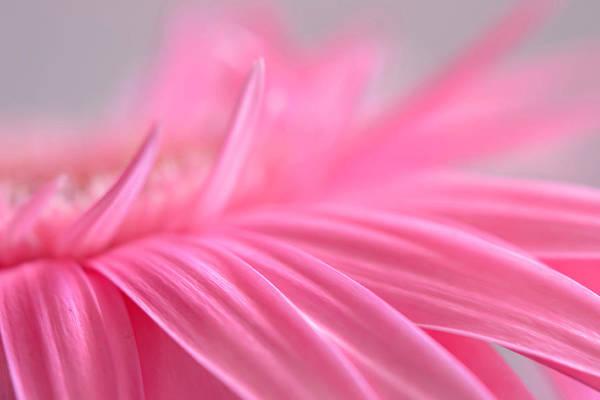 Photograph - A Gentle Whisper by Melanie Moraga