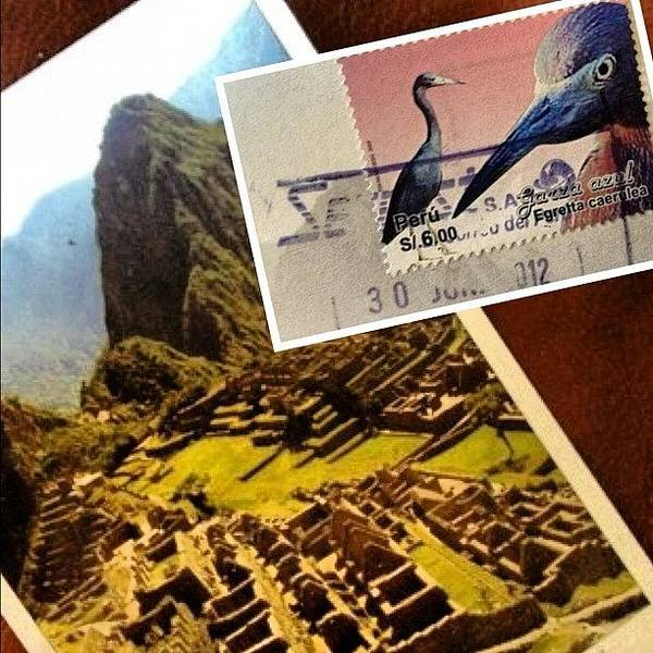 Egret Photograph - A Good Mail Day by Travel Designed