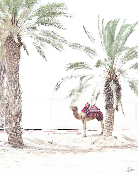 Photograph - A Hot Day In The Negev Desert by Endre Balogh