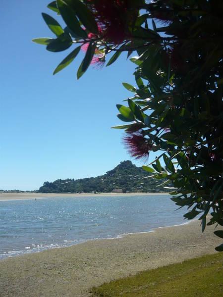Pohutukawa Photograph - A Kiwi Summer by Amy Jayne Roper