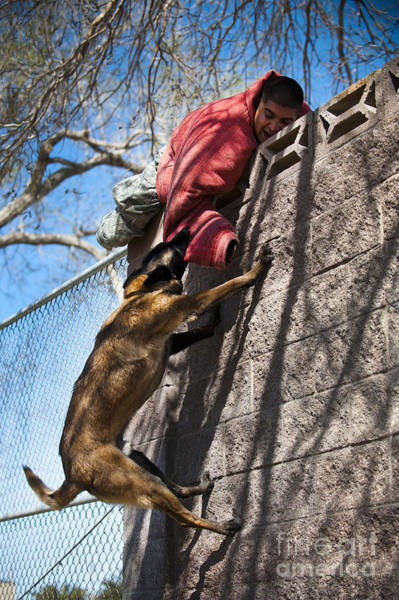 Base Jumping Photograph - A Military Working Dog Climbs A Wall by Stocktrek Images