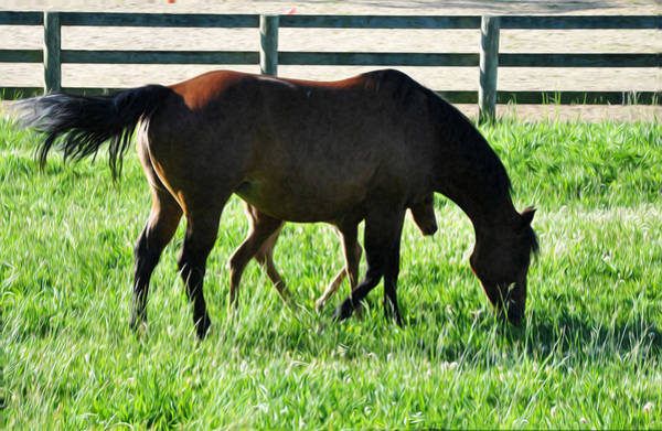 Mare And Foal Photograph - A Mother And Little One by Bill Cannon