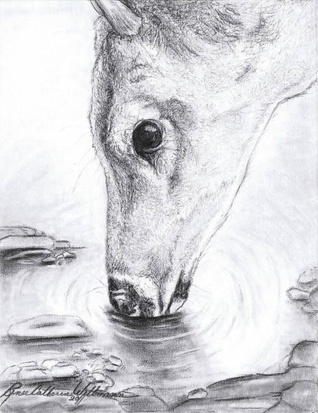 Whitetail Drawing - A Needed Drink by Renee Catherine Wittmann