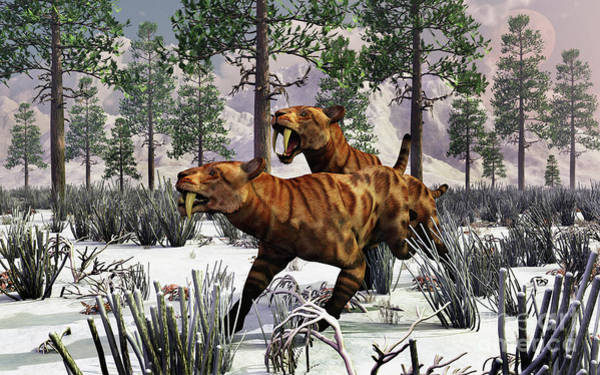 Smilodon Wall Art - Digital Art - A Pair Of Sabre-toothed Tigers Hunting by Mark Stevenson