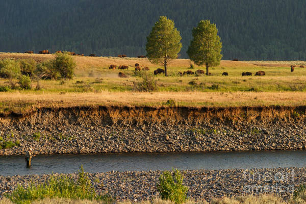 Photograph - A Peaceful Moment On The Lamar River by Charles Kozierok